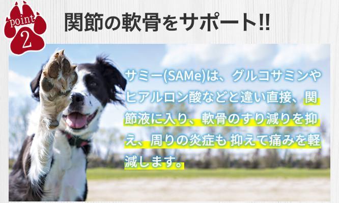サミーフィッシュ(SAMe) 効果・効能(関節の軟骨サポート)