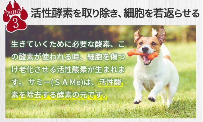 サミーフィッシュ(SAMe) 効果・効能(活性酸素の除去)